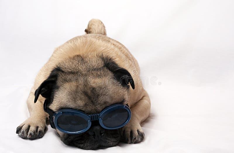 Pug triste con gli occhiali di protezione fotografia stock libera da diritti