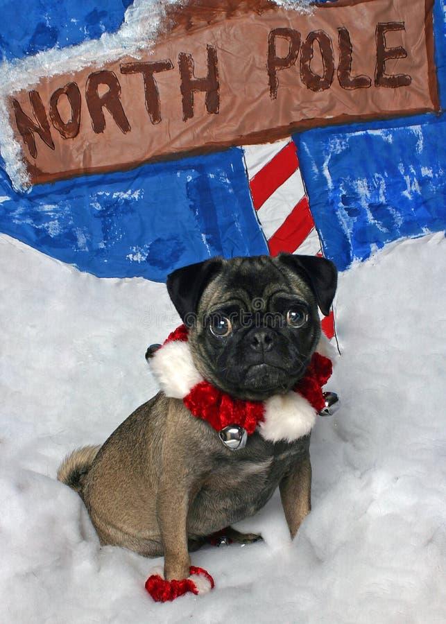 Pug van Kerstmis royalty-vrije stock foto