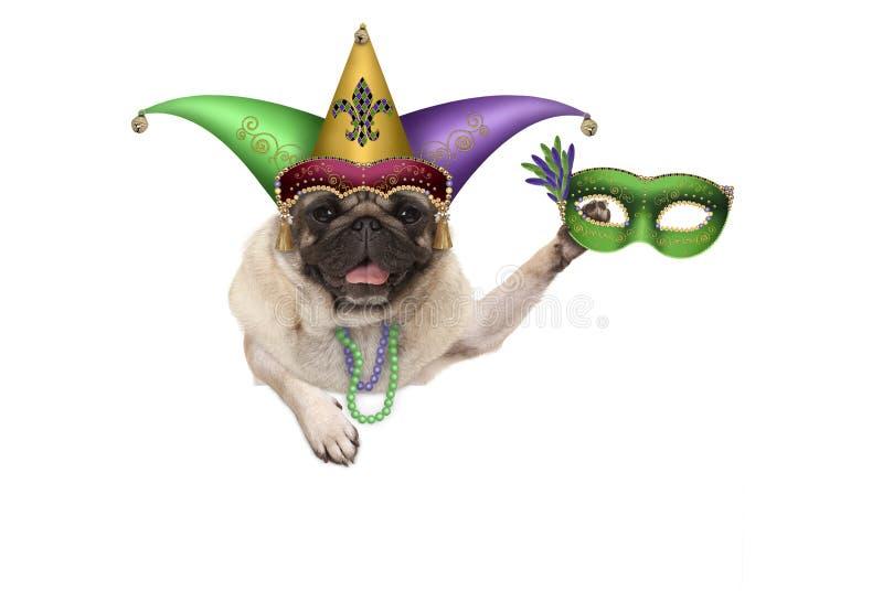 Pug van Mardigras puppyhond met Carnaval-harlekijnhoed en het Venetiaanse masker hangen op lege banner royalty-vrije stock foto