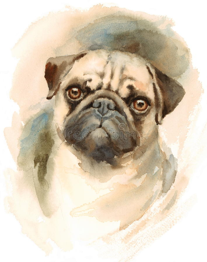 Pug Watercolor Dog Breed Animal Illustration Hand Painted. Hand painted side view Watercolor Portrait of Pug Dog royalty free illustration