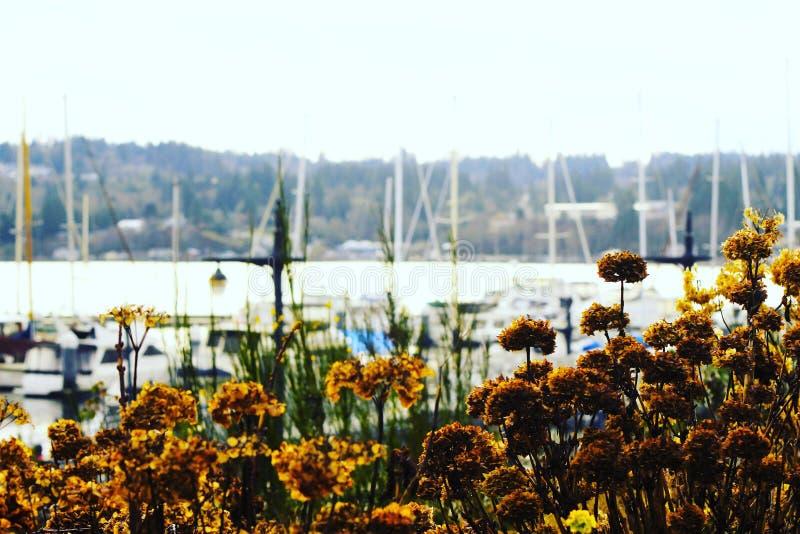 Puget Sound stockfotos