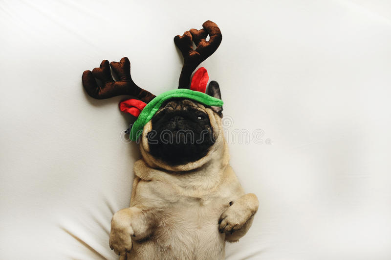 Pughund im Weihnachtskostüm lizenzfreies stockfoto