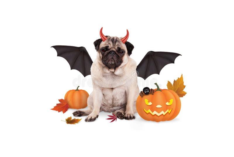 Pughund kleidete oben als Teufel für Halloween, mit furchtsamer Kürbislaterne an lizenzfreies stockfoto