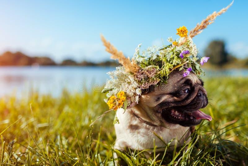 Pughundetragender Blumenkranz durch Fluss Glücklicher Welpe, der draußen auf Sommerfeld kühlt lizenzfreies stockfoto
