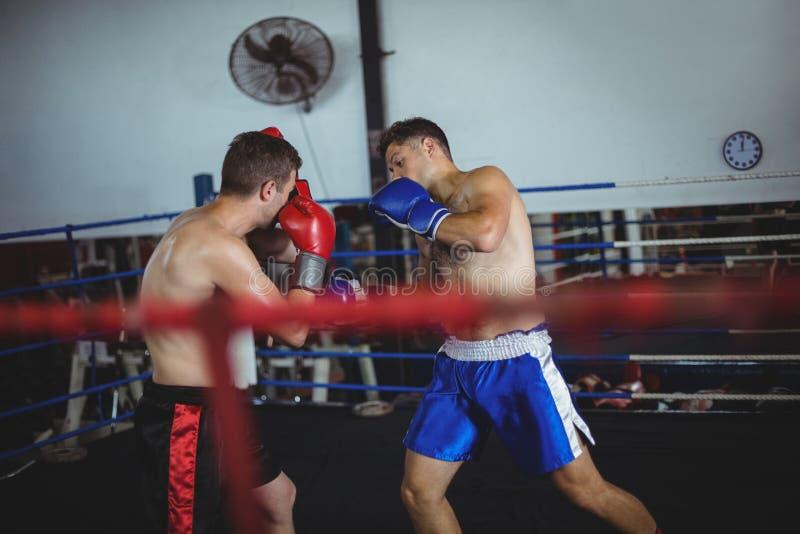 Pugili che combattono in ring fotografia stock