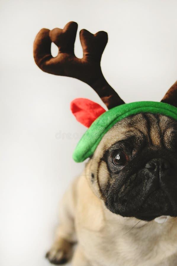 Pugporträt im Weihnachtskostüm stockfoto