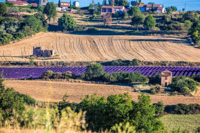 Puimoisson wioska z lawendy polem w Provence, Francja obrazy stock
