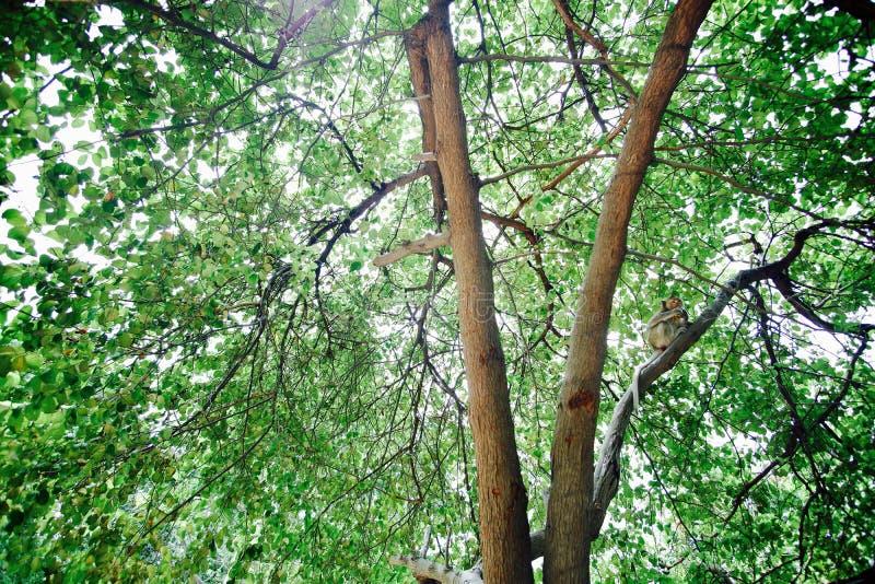 Puissance de forêt photos libres de droits