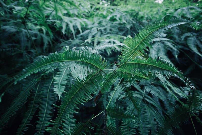 Puissance de fougère verte images libres de droits