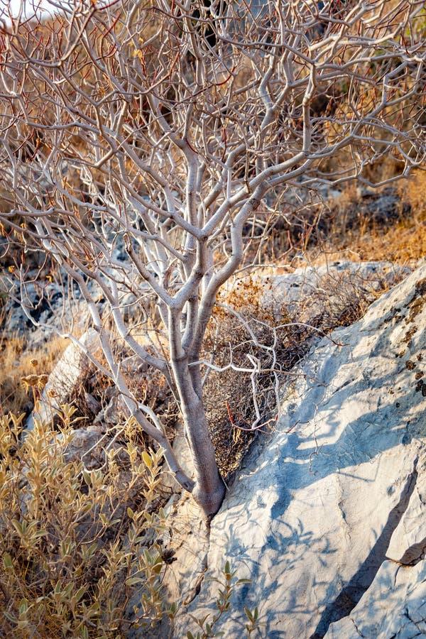Download Puissance de nature image stock. Image du force, fonds - 77157261