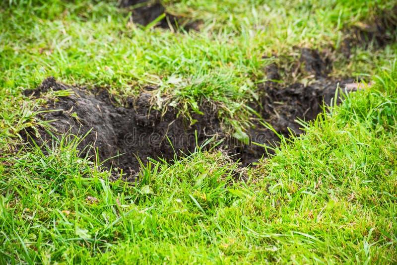 Puits excavé dans la terre couverte d'herbe photo stock