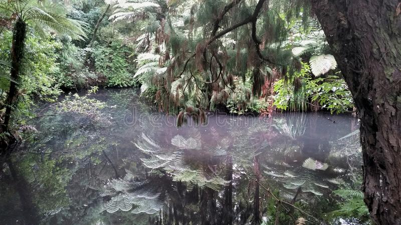 Pukekura Park湖反射 免版税库存照片