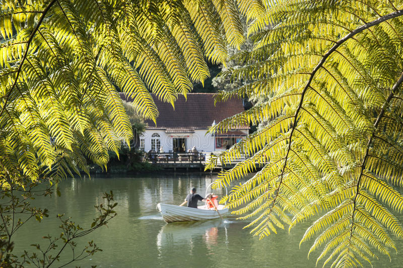 Pukekura Park, New Plymouth. Scene through fern fronds across the lake at Pukekura Park, New Plymouth. scenes. New Zealand. Unrecognisable people in row boat stock photography
