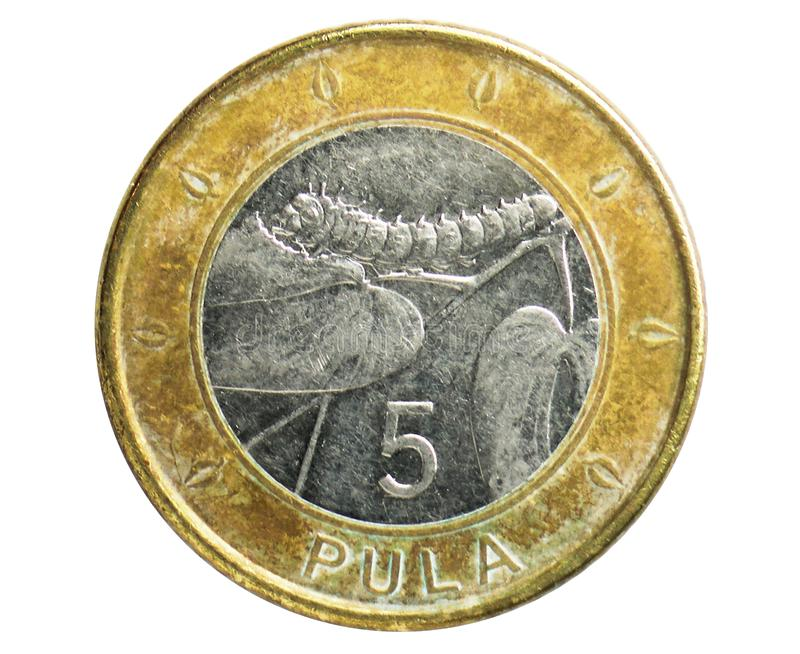 5 Pula coin, 1976~Today - Circulation Pula serie, Bank of Botswana. Obverse, issued on 2013. Isolated on white royalty free stock images
