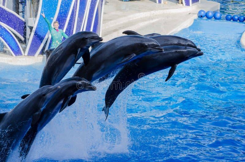 Pulando golfinhos imagem de stock
