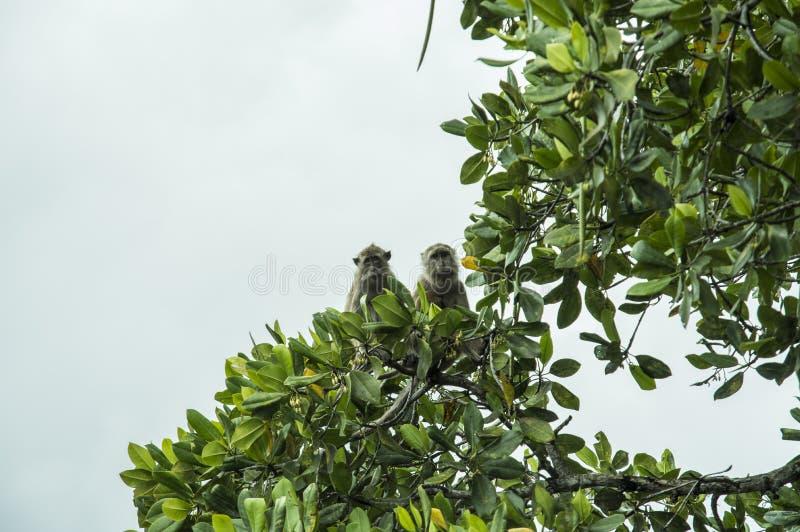 Pulau Rinca - nationales Komodowaran Parc stockbilder