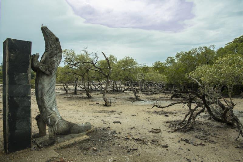 Pulau Rinca - Parc Komodo nacional - dragão foto de stock