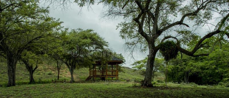 Pulau Rinca - Parc Komodo nacional - lugar a descansar imagem de stock