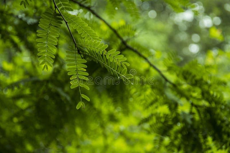 Pulau Rinca - Parc nationales Komodo - Natur lizenzfreie stockfotos