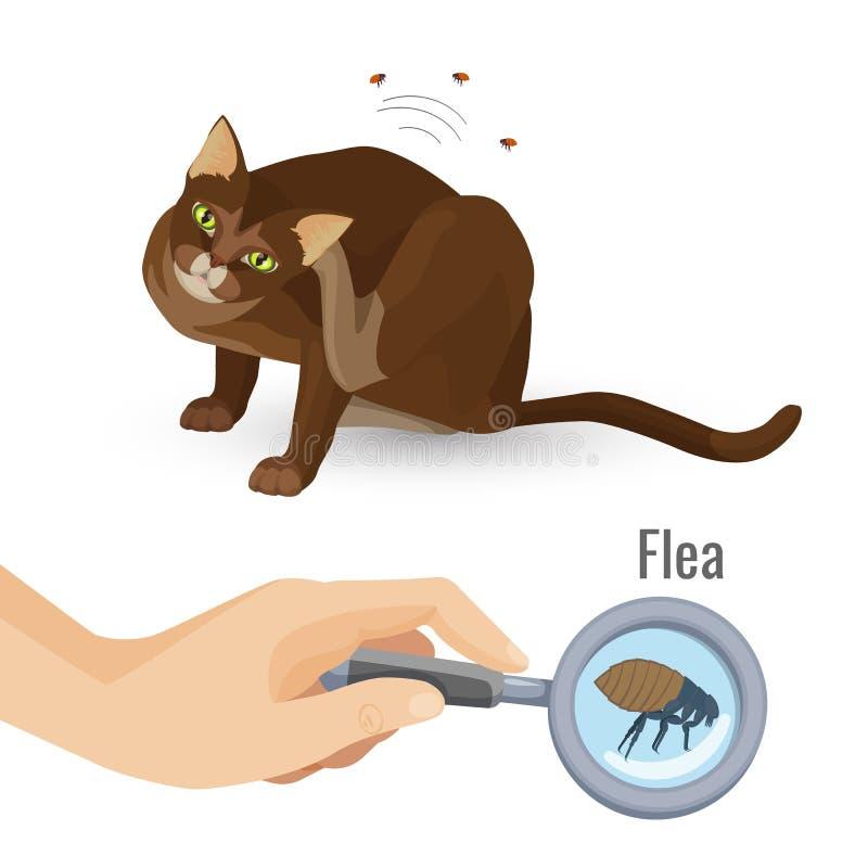 Pulce illustrazione nociva di vettore dell'organismo della pelliccia del gatto dalla bio- illustrazione di stock