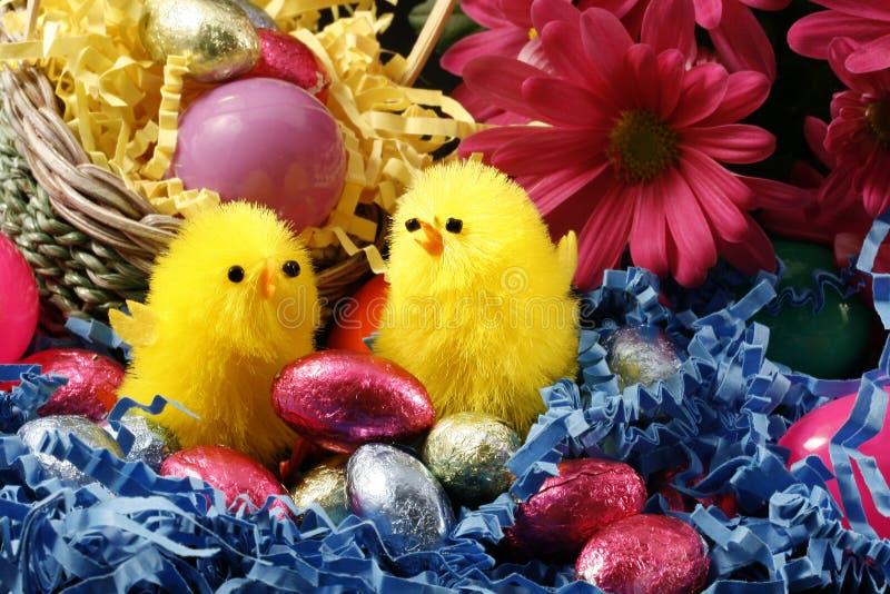 Pulcini di Pasqua fotografie stock libere da diritti