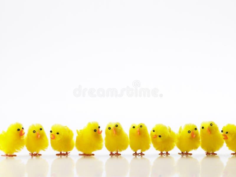 Pulcini di Pasqua in una riga fotografia stock
