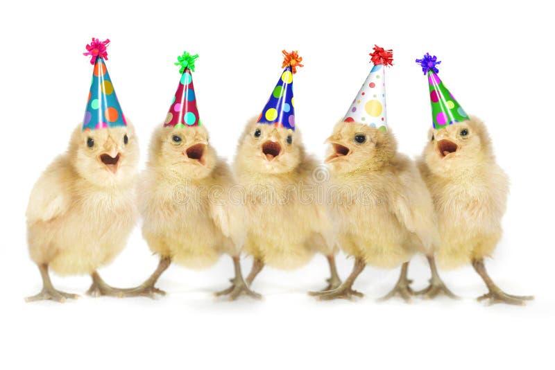 Pulcini gialli del bambino che cantano buon compleanno fotografie stock libere da diritti