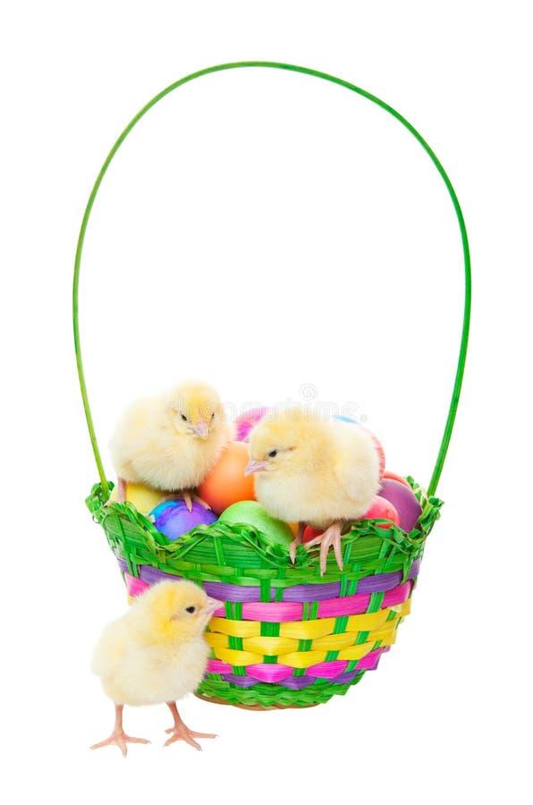 Pulcini nel cestino di Pasqua fotografie stock libere da diritti