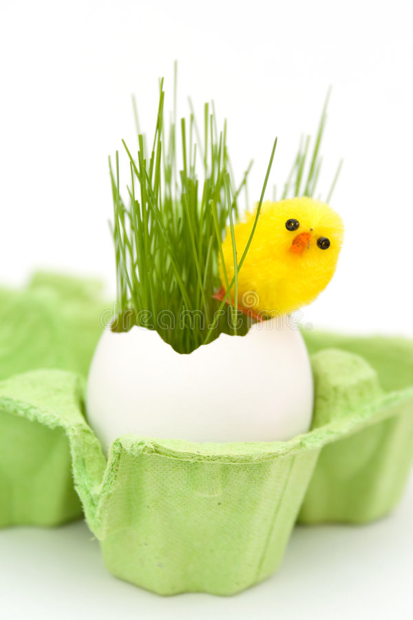 Pulcino di Pasqua fotografia stock