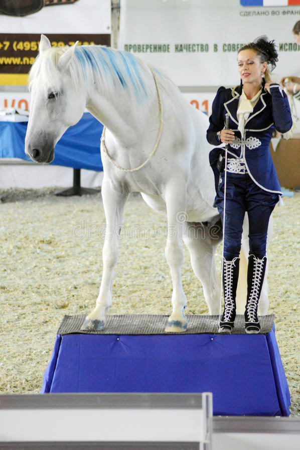 Puleggia tenditrice della donna in un vestito blu scuro vicino ad un cavallo Mostra internazionale del cavallo fotografie stock