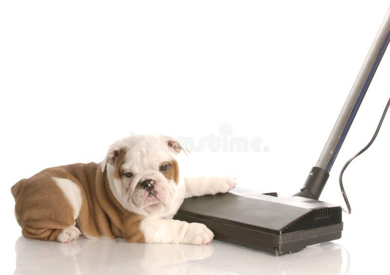 Pulendo dopo il cane fotografia stock libera da diritti