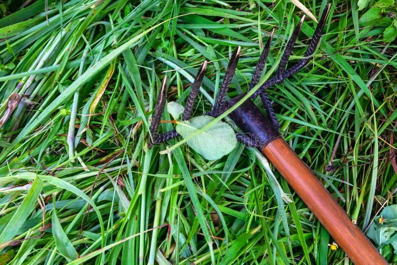 Pulendo l'erba con un rastrello fotografie stock libere da diritti