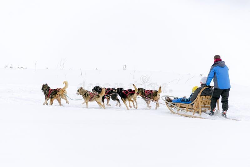 Pulkahundkapplöpning i det snöig landet arkivbild