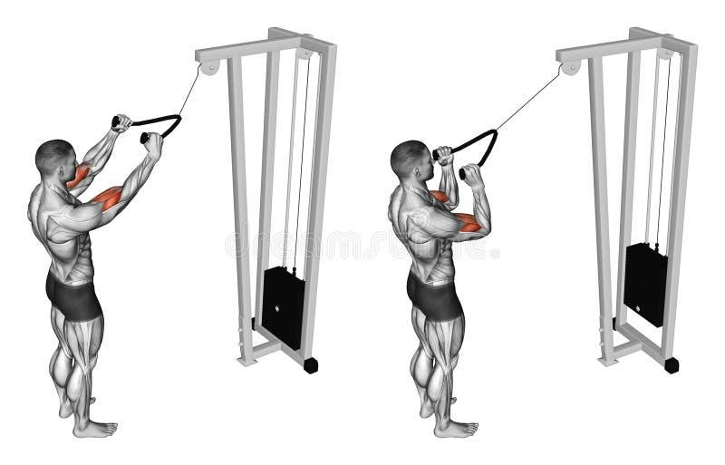 _ Pulldown ćwiczenie mięśnie bicepsy ilustracji
