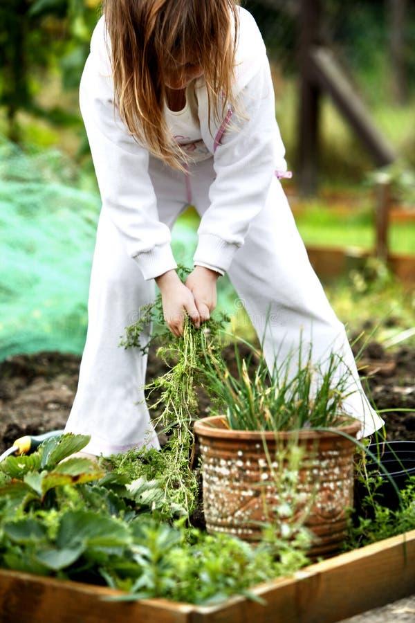 Pulling weeds stock photo