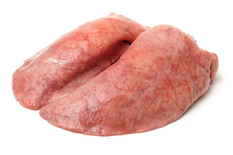 Pulmão do porco imagem de stock