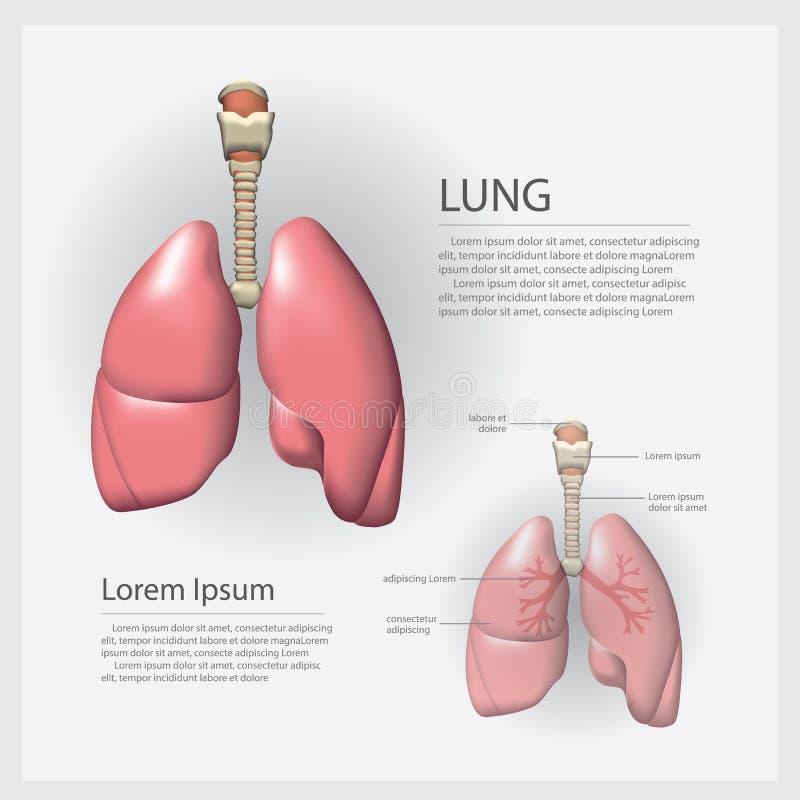 Pulmão humano da anatomia com detalhe ilustração stock