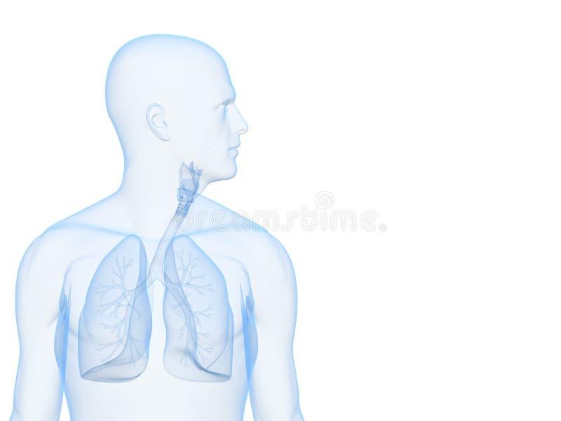 Pulmón humano stock de ilustración
