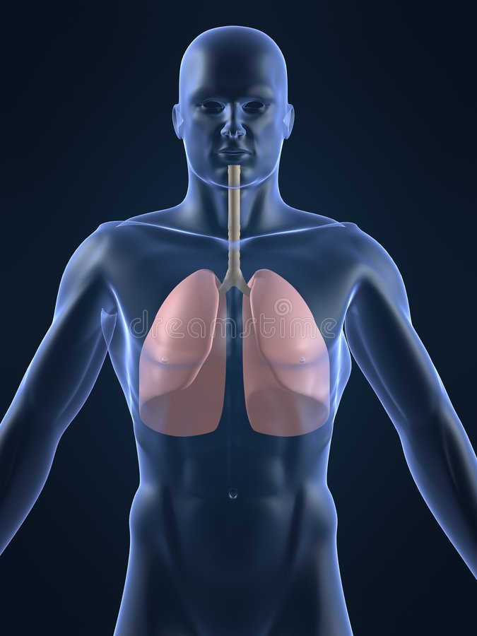 Pulmón humano libre illustration