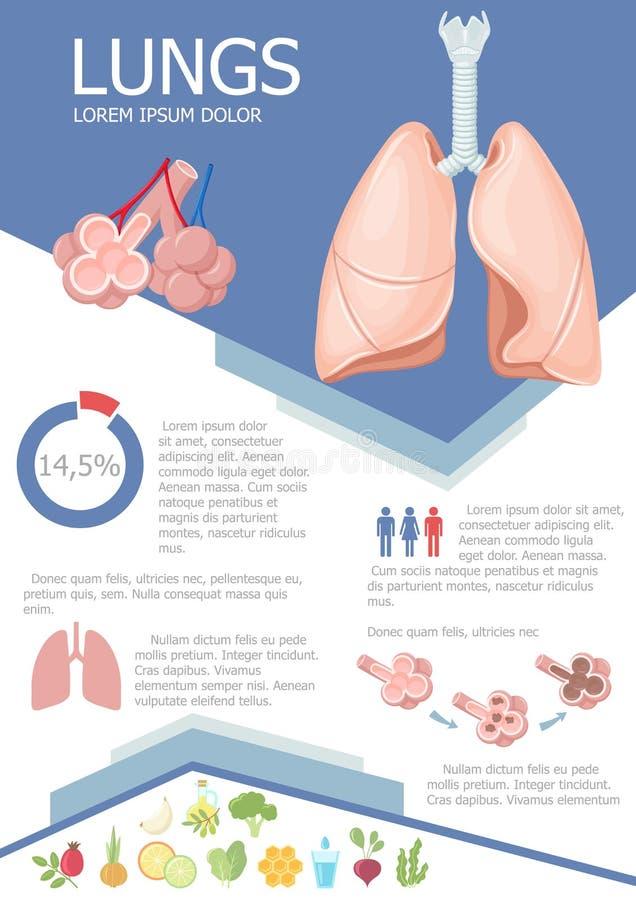 Pulmón humano infographic libre illustration