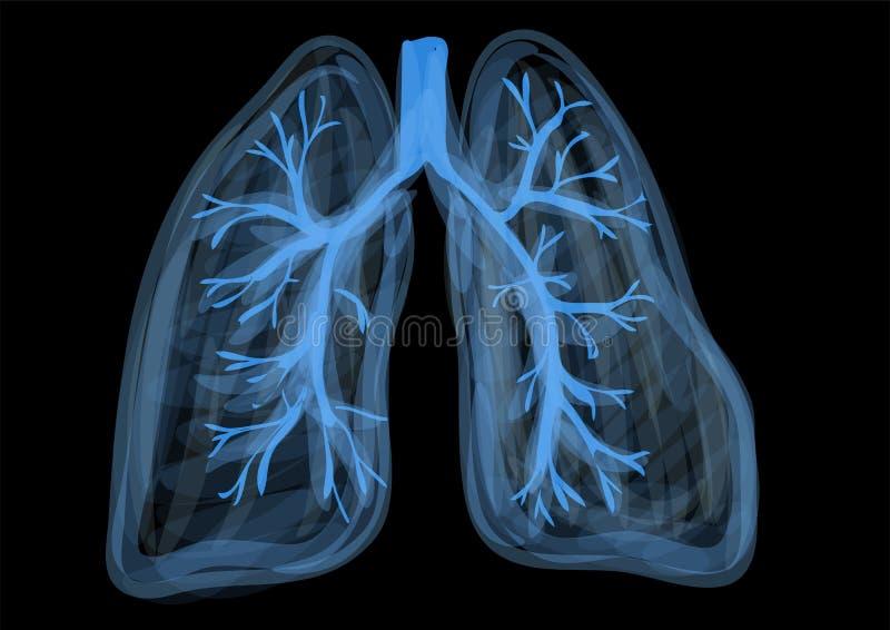 Pulmones ilustración del vector