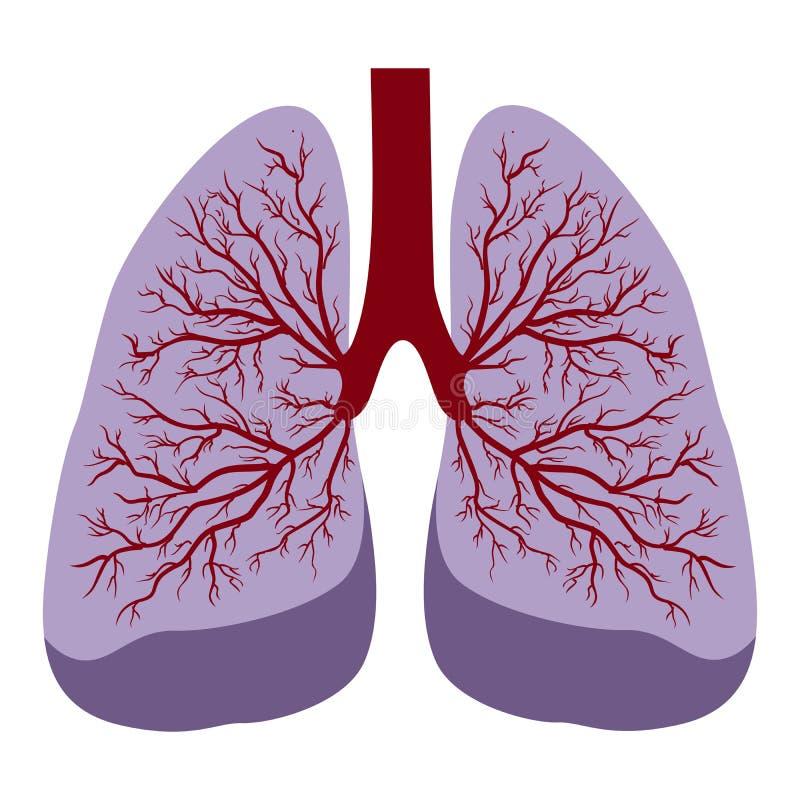 Pulmones humanos ilustración del vector