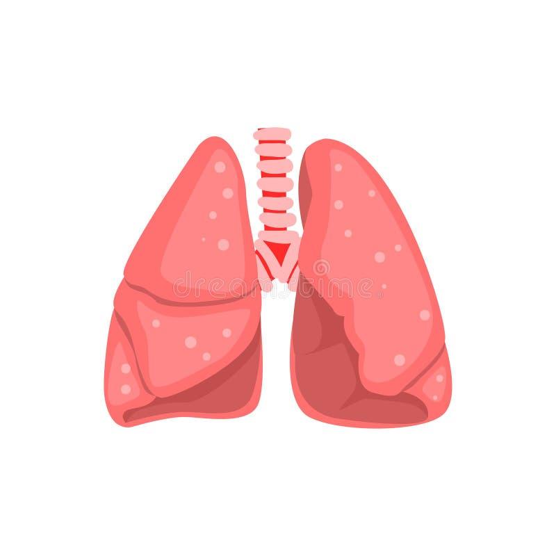 Pulmones humanos, ejemplo del vector de la anatomía del órgano interno en un fondo blanco libre illustration