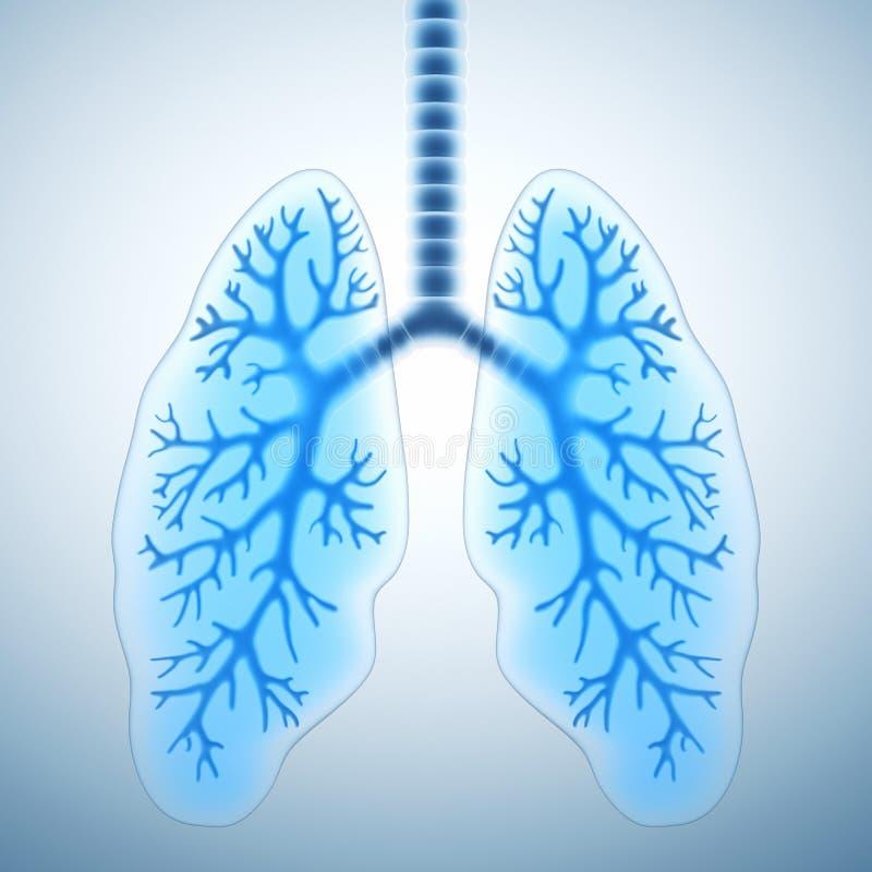 Pulmones sanos libre illustration