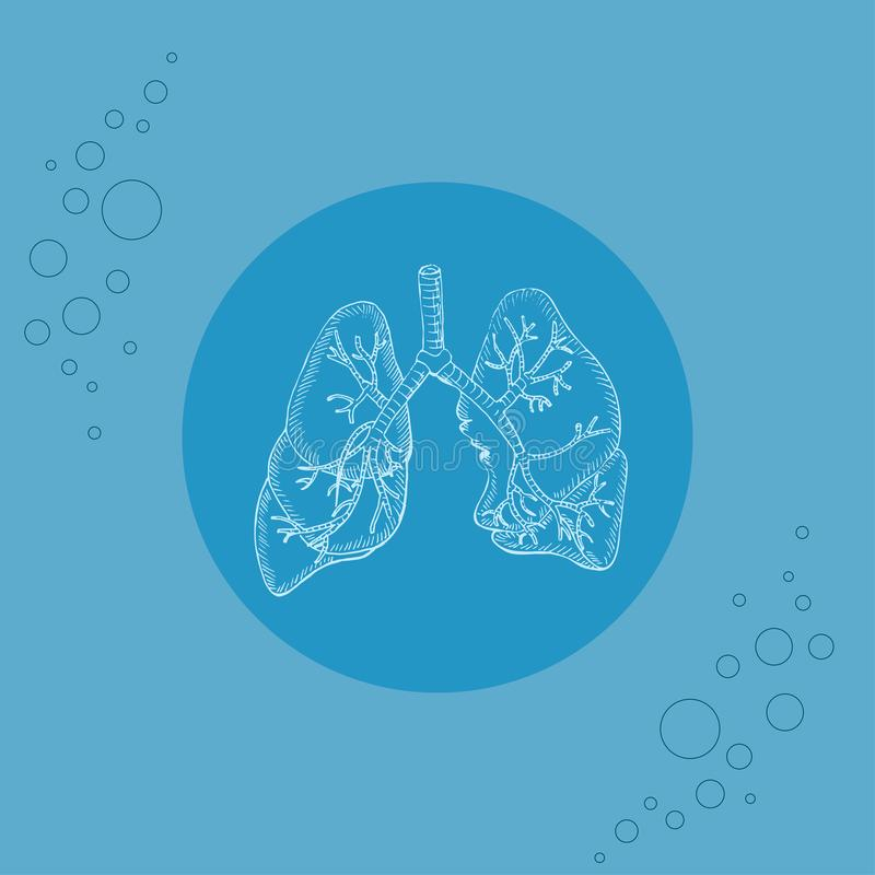 Pulmones y bronquios humanos blancos en el substrato stock de ilustración