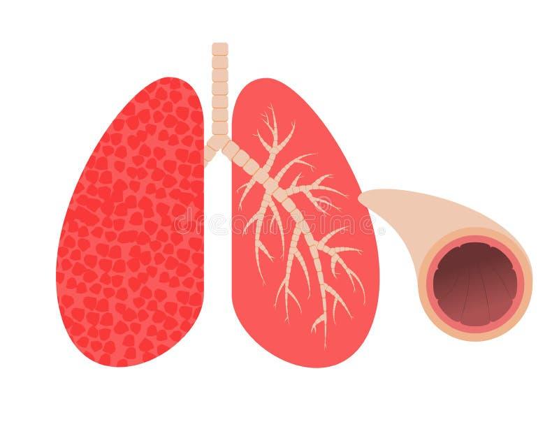 Pulmones y bronquios Tubo bronquial Ilustración del vector ilustración del vector
