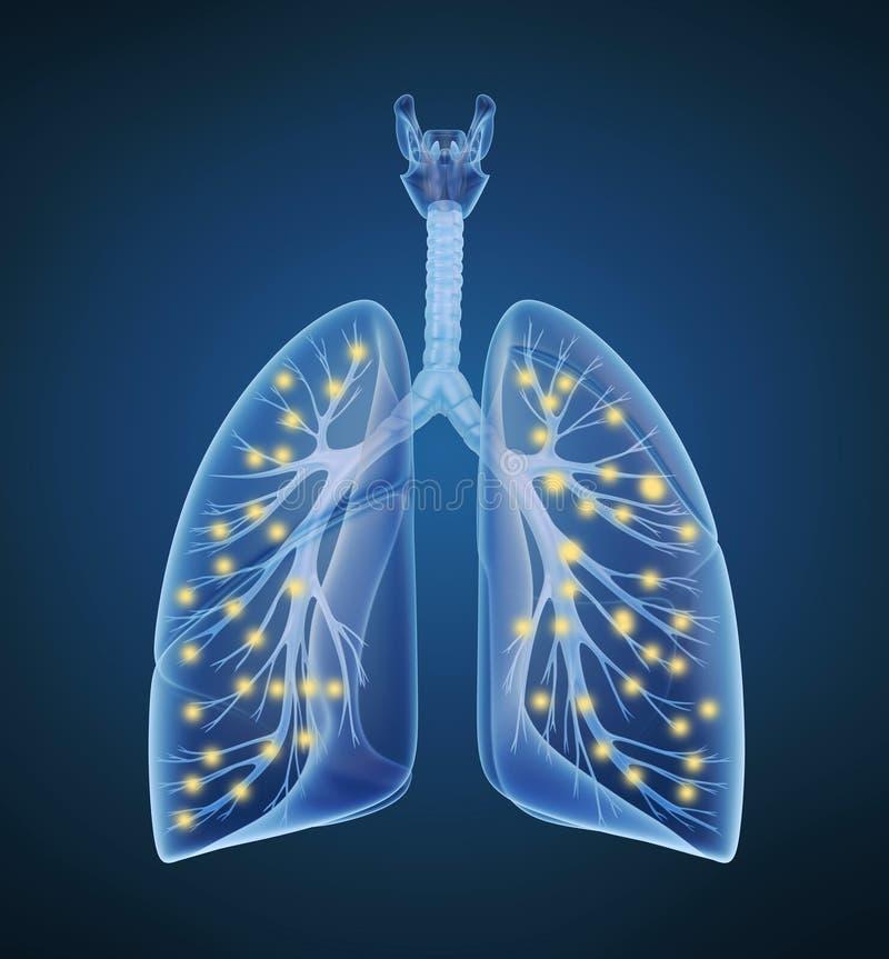Pulmones y bronquios y oxígeno humanos en la opinión de la radiografía ilustración del vector