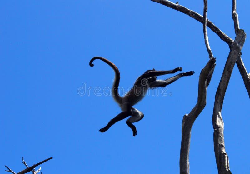 Pulo do macaco foto de stock royalty free