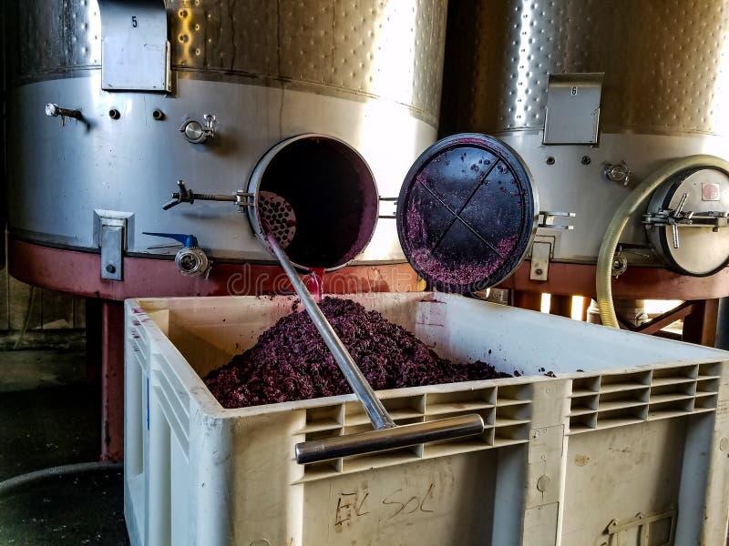 Pulpa de la uva de vino foto de archivo libre de regalías