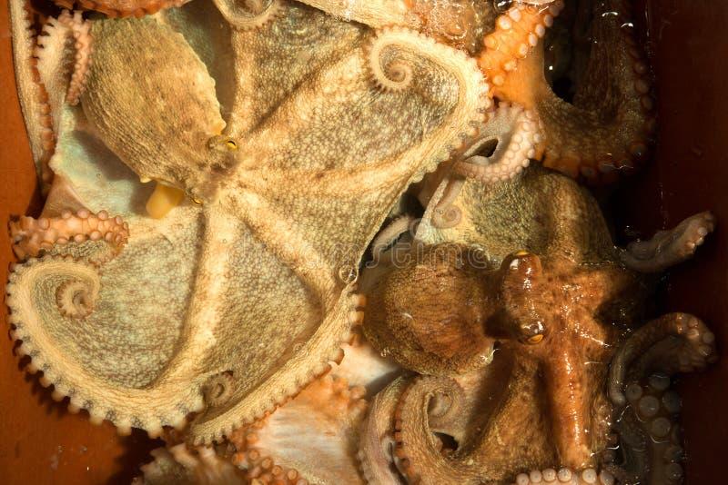 Pulpo para la venta en un mercado de pescados coreano imagenes de archivo